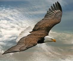 eagle